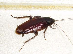 ゴキブリ駆除器 広島