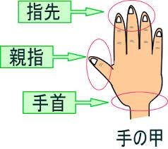 手洗い 注意ポイント 感染症対策 食中毒対策 広島