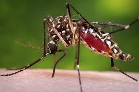 デング熱 蚊対策